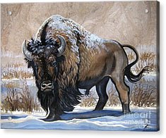 American Bison Winter Acrylic Print by Anne Shoemaker-Magdaleno