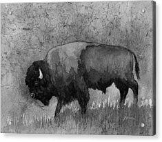 Monochrome American Buffalo 3  Acrylic Print by Hailey E Herrera