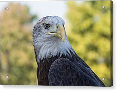 Acrylic Print featuring the photograph American Eagle by Jeanne May