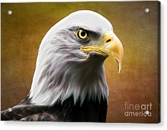 American Eagle Acrylic Print by Shannon Rogers