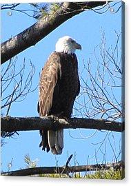 American Eagle Acrylic Print by Susan Carella