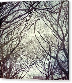 American Elm Trees Of Central Park In New York City In Winter Acrylic Print by Lisa Russo