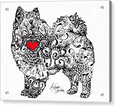 Acrylic Print featuring the drawing American Eskimo by Melissa Sherbon