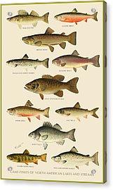 American Game Fish Acrylic Print by Gary Grayson