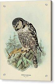 American Hawk Owl Acrylic Print by Dreyer Wildlife Print Collections