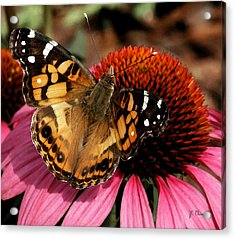 Acrylic Print featuring the photograph American Lady  by James C Thomas