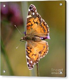 American Lady Butterfly Acrylic Print by Karen Adams