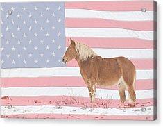 American Palomino Acrylic Print by James BO  Insogna