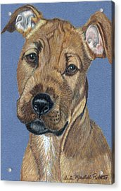 American Pit Bull Terrier Puppy Acrylic Print by Anita Putman