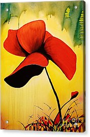 American Poppy Acrylic Print by Kyle  Brock