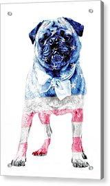 American Pug Acrylic Print