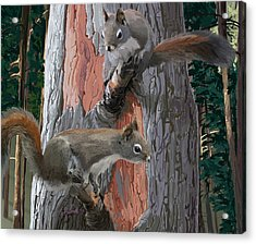 American Red Squirrels Acrylic Print