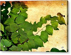Acrylic Print featuring the photograph American Redbud by Denise Tomasura