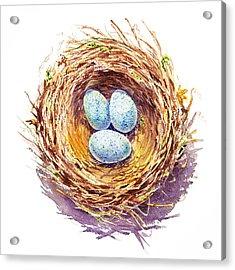 American Robin Nest Acrylic Print by Irina Sztukowski