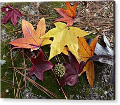 Acrylic Print featuring the photograph American Sweetgum Autumn Display by William Tanneberger