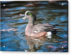 Acrylic Print featuring the photograph American Wigeon by Tyson and Kathy Smith