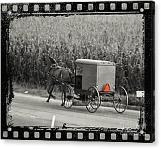 Amish Buggy Monochrome Acrylic Print by Terry Weaver