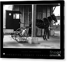 Amish Buggy Parking Acrylic Print