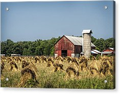 Amish Country Wheat Stacks And Barn Acrylic Print by Kathy Clark