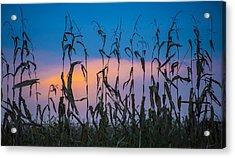 Amish End Of Harvest Acrylic Print by Bruce Neumann