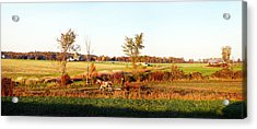 Amish Farmer Plowing A Field, Usa Acrylic Print by Panoramic Images