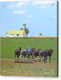 Amish Farmer Working The Land Acrylic Print