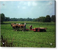 Amish Field Work Acrylic Print