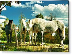 Amish Work Horses Acrylic Print by Dick Wood