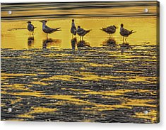 Among Friends Acrylic Print by Marvin Spates