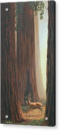 Sequoia Trees - Among The Giants Acrylic Print by Crista Forest