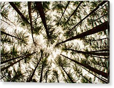 Among The Trees Acrylic Print
