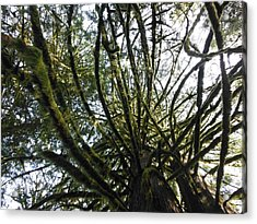 Amongst The Branches Acrylic Print by Lori Thompson