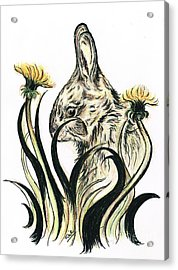 Rabbit- Amongst The Dandelions Acrylic Print by Teresa White