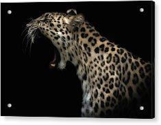 Amur Leopard (in Colour) Acrylic Print by David Williams