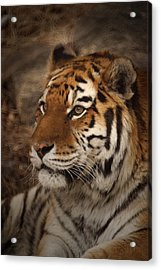 Amur Tiger 2 Acrylic Print