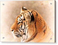 Amur Tiger Acrylic Print by Karol Livote