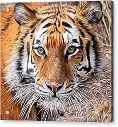 Amur Tiger Portrait Acrylic Print