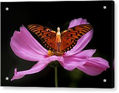 Amy The Butterfly Acrylic Print