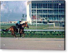 An All Out Work Out Acrylic Print by Roy Emmett