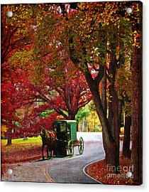 An Amish Autumn Ride Acrylic Print by Lianne Schneider