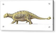 An Ankylosaurus Dinosaur With Full Acrylic Print