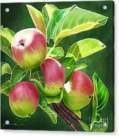 An Apple A Day Acrylic Print by Joan A Hamilton