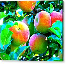 An Apple A Day Acrylic Print by Kay Gilley