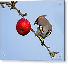 An Apple A Day... Acrylic Print by Torbjorn Swenelius