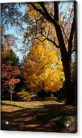 An Autumn Holdout - Davidson College Acrylic Print by Paulette B Wright