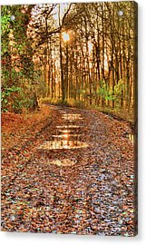 An Autumn Track Acrylic Print by Dave Woodbridge