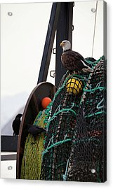An Eagle Sits On The Fishing Nets On A Acrylic Print by Marion Owen / Design Pics