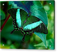 An Emerald Beauty Acrylic Print by Karen Stephenson