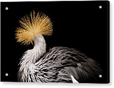 An Endangered East African Crowned Acrylic Print by Joel Sartore