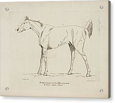 An Illustration Of A Horse Acrylic Print by British Library